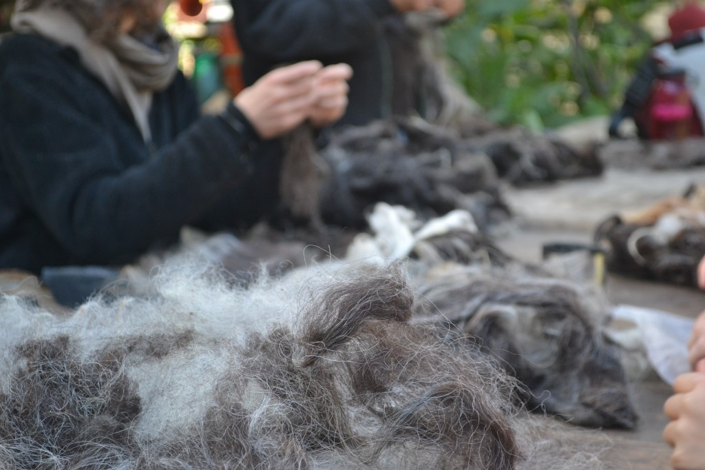 fluffing wool